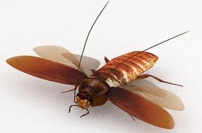 Palmetto Bug 2