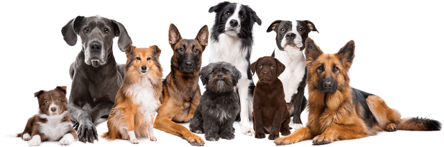 pack-of-dogs-calm-and-attentive